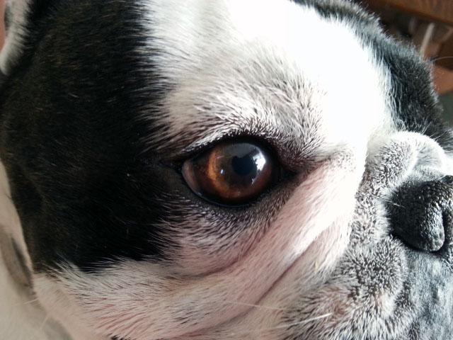ガブリエルの角膜潰瘍 9日目
