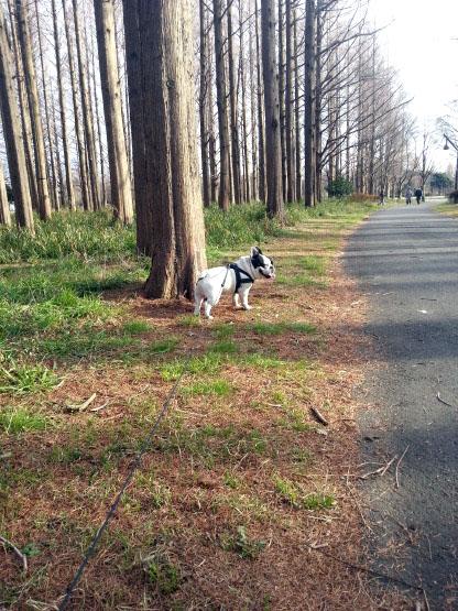 ガブリエル、水元公園での散歩
