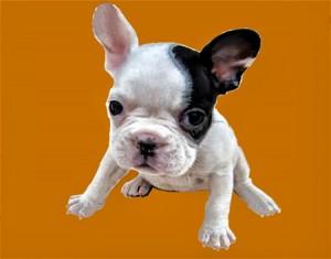 愛犬の写真が素敵なステンドグラスの箱になります。